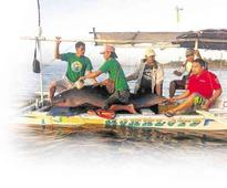 Whale keeps returning to shore, is stranded