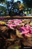 Brazil still enjoys fall while northern hemisphere embraces spring