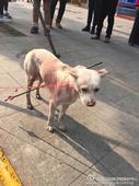 Dog gets shot by arrow on street in Chengdu