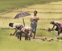Maharashtra farm loan waiver for the poor? Shiv Sena MLA a beneficiary too