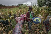 The Race To Stop A Looming Food Disaster In Southern Africa