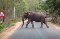 Wild elephant dies in Chinnakanal; 3rd death within a month