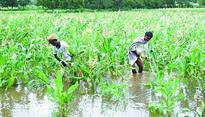 'Land compensation rate to be fixed after talks with farmers'
