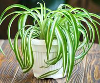 Low Light Plants That Are Best For Apartment Garden