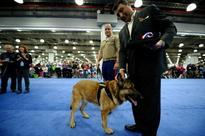 Lucca the three-legged hero marine dog awarded PDSA Dickin Medal for animal bravery