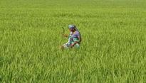 Yavatmal farmer deaths: Maharashtra Govt suspends DOA