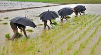 Farmers short of cash, West Bengal stares at 1/3 paddy wastage