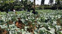 Africa Transforming Agriculture To Combat Climate Change  Analysis