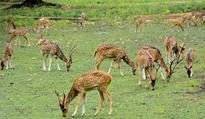 Major fillip to tourism in Kothagudem