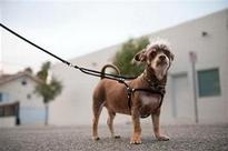 To check stray menace, corp plans microchips for pet dogs
