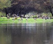20,760 waterfowl at Bharatpur sets a 25-year record