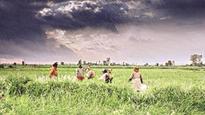 Crop insurance scheme hits premium hurdle