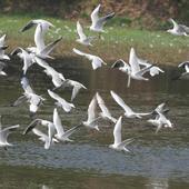 Mumbai: Wildlife board nod to 3 bird sanctuaries around city