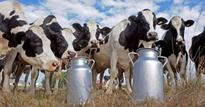 This IITian sells milk from his dairy farm at reasonable price to villagers