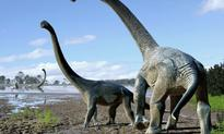 New long-necked dinosaur species discovered in Australia