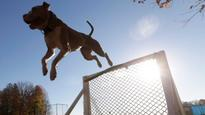 Coderre defends suspended pit bull bylaw, vows appeal