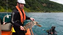 Nursed turtle returns home to Kermadecs after lengthy recovery