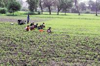Crop insurance plan pays off as 9 lakh farmers enrol under PMFBY in Karnataka