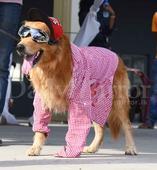 Canine Carnival ...