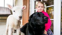 Lamb's best friend