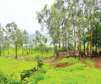 Over 16 years, ex-surgeon reforests 45 acres of land