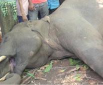 Another young elephant died of electrocution in Rajaji Tiger Reserve