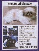 CCTV grab, posters end ordeal as lost puppy reunites with family