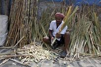 India to revoke compulsory sugar export order - government sources