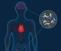Gut microbes may play a role in Parkinson's d...