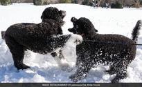 Barack Obama's Pets Bo And Sunny's Life As Canine Ambassadors Of White House