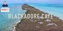 RE/MAX Belize Agent Will Mitchell Releases HD Drone Video of Actor Leonardo DiCaprio's Private Island Blackadore Caye