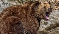 Bear Attack: How To Survive, The Revenant Style