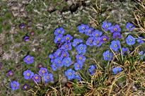 Hidden Treasures: Rare Plants of the Alpine Himalayas is one man's quest to collate 100 species