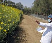 Activists urge government to reject GM mustard application