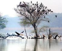 Sultanpur bird sanctuary to reopen from October 1