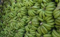Waste-to-wealth model to process banana waste