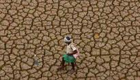 Parched lands of Goa's Sattari leave farmers distressed