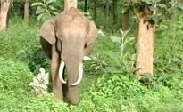 Man Trampled To Death By Elephant In Chhattisgarh Forest