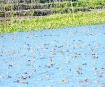 Majuli reverberates with local, migratory birds