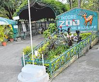 Indore: Miffed over violations, CZA seeks shifting of two tigers from city zoo