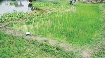 Nabaganga River now cropland