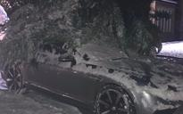 Michael Owen's Bentley buried under tree after he parked it to shelter from snow