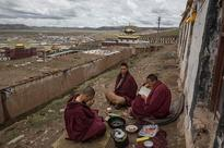 Search for prized fungus a way of life on Tibetan Plateau.