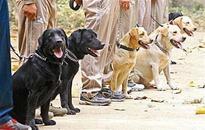 Soon, railway cops to get dog squad