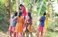 Women coconut tree climbers just a phone call away
