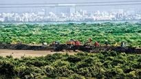 Politicians not above the law: Bombay HC directs police to book 2 corporators for encroaching on mangroves