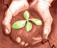 Over 8.5L saplings planted in Varanasi