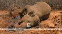 Elephant dies of dehydration in Sirumugai forest range