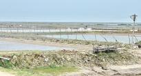 Sharp Shrimp Production Increases in India's Tamil Nadu Blamed for Damaging Other Crops