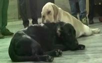 After Azam Khan's Buffaloes, UP Cops Fret Over Lawmaker's Dog
